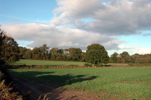 Farmland north of Dumpford Lane