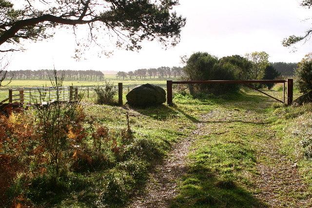 Forest track near Speyslaw