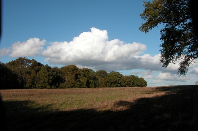 Looking across farmland to Elsted Rough