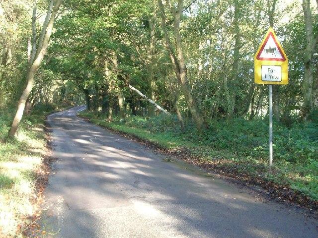 Gracious Pond Road