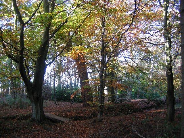 Saltoun Big Wood.