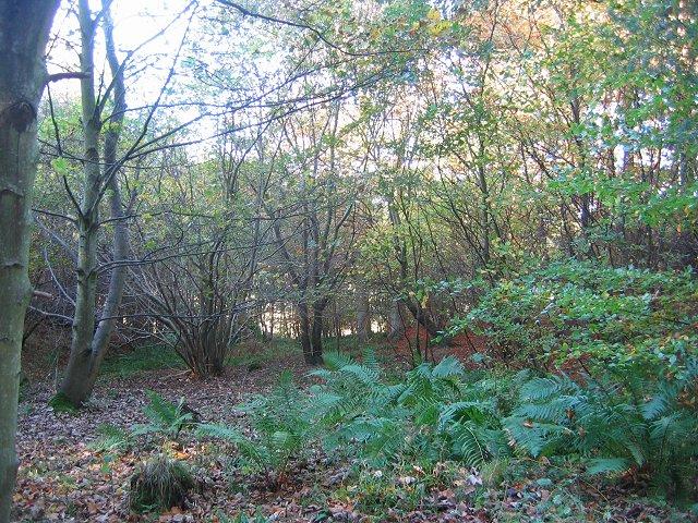 Humbie Wood.