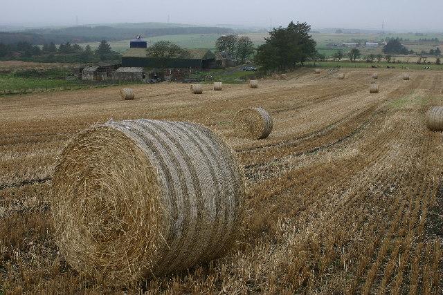 South Redbog farm