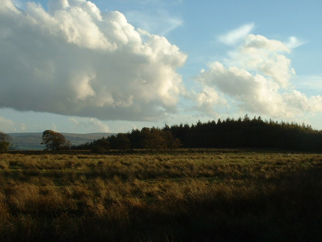 Higher Tatham Wood, near Arkholme