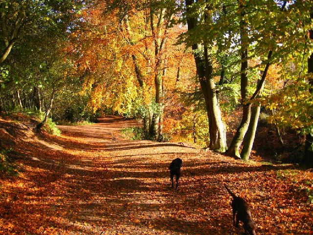 Autumn Colour, Delamere Forest