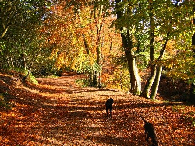 Ne Sa Dog Walks Near