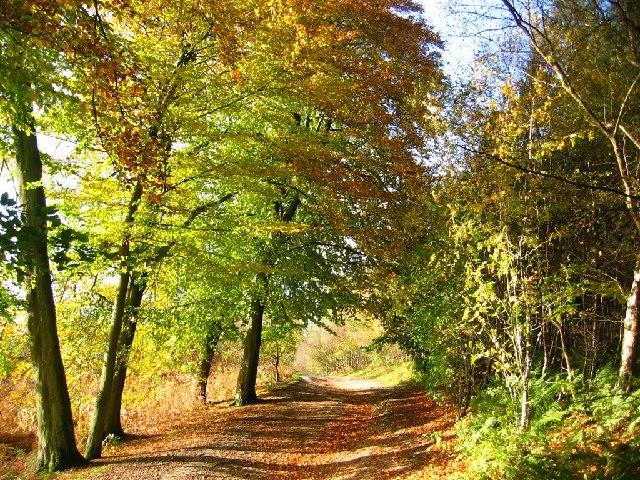 More Autumn Colour, Delamere Forest