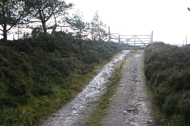 Track leaves the trees for open moorland