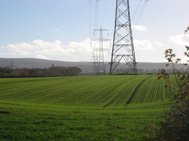 Winter barley, Humbie Wood.