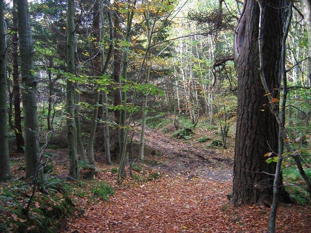 In Humbie Wood.