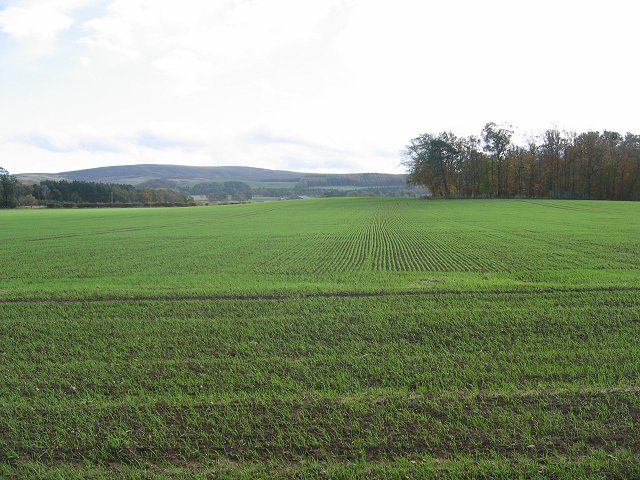 Winter barley, Bughtknowe.