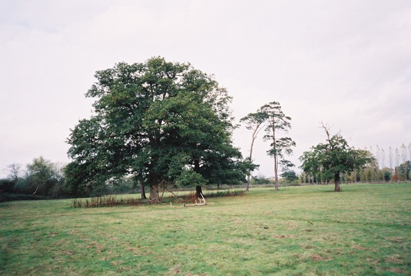 Field and trees, Hungerford
