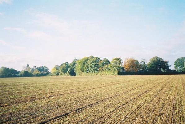 Farmland, Waltham St Lawrence