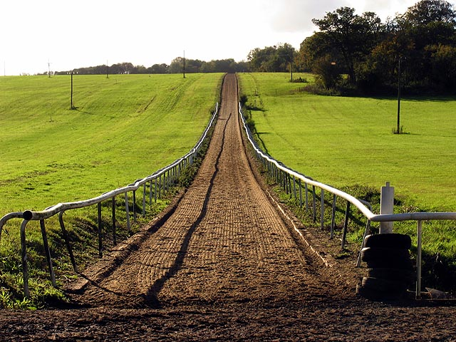 Gallops at Whatcombe