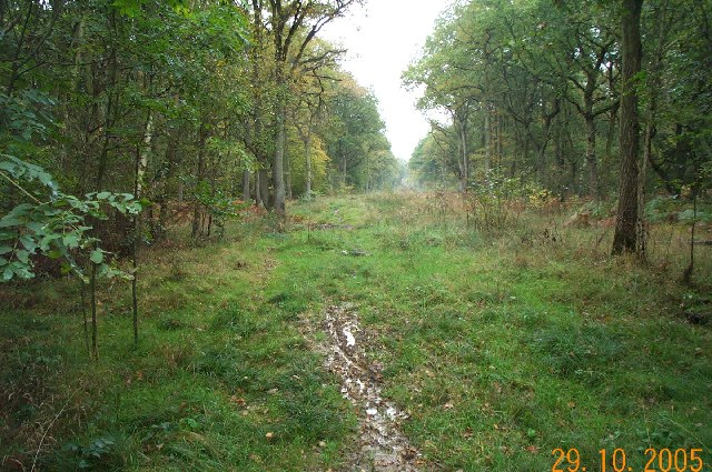 Bricket Wood Common