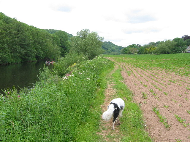 River Wye near Bishopswood
