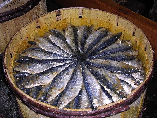 "Pilchards - ""Cornish Sardines"""