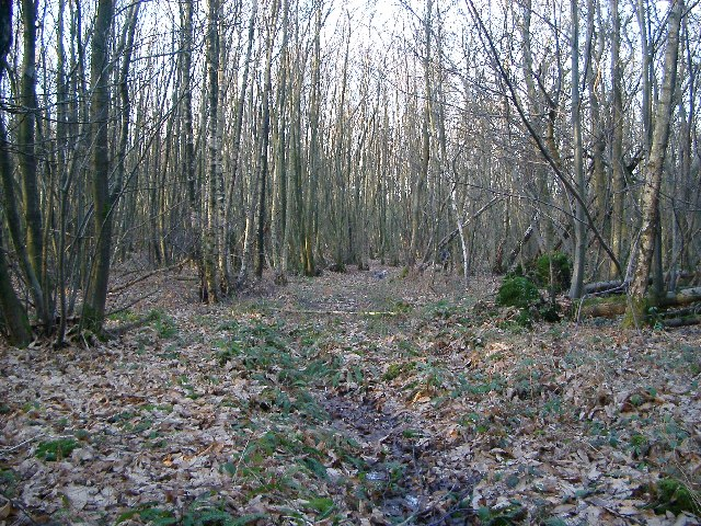 Coppiced Woodland