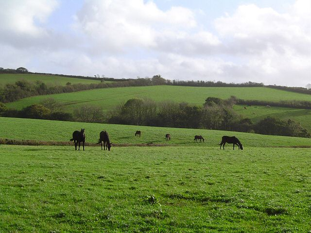 Horses near Littlehempston - South Devon