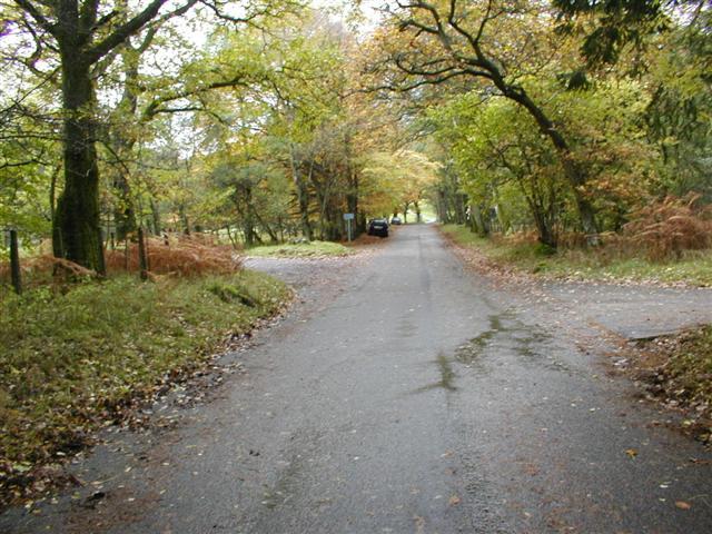 Burnbanks Wood