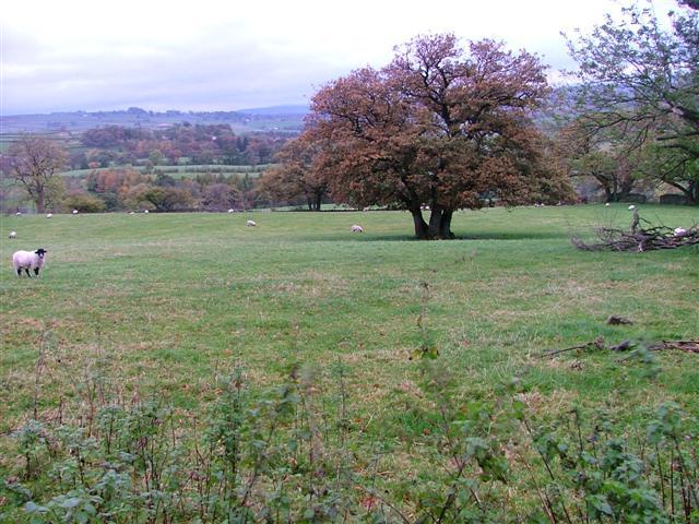 Fields Below Low Hullockhowe