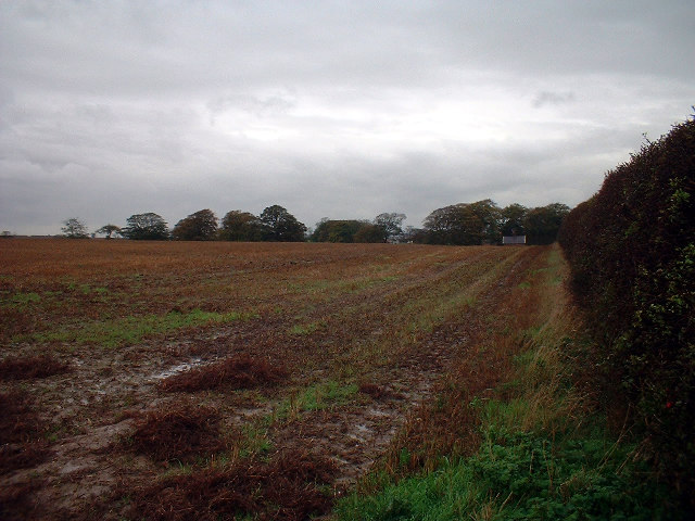 November Fields