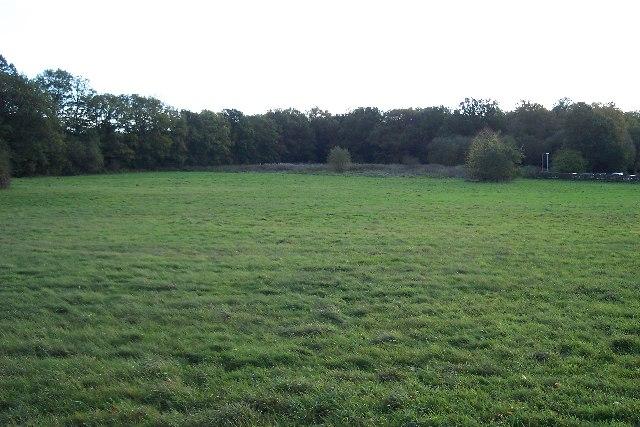 Grassland and Woodland
