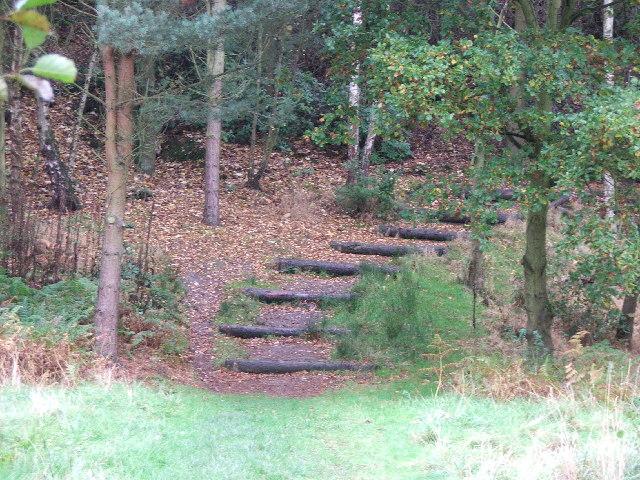 Wooden steps into Bushcliff Wood.