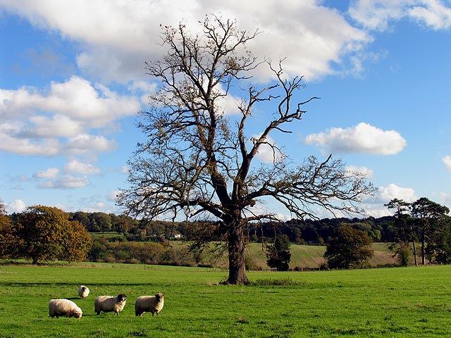Pastoral Tranquility near Winterbourne