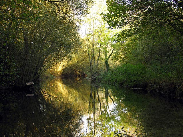 Reflections on the River Lambourn