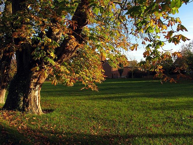 Chestnut Tree at Weston Court
