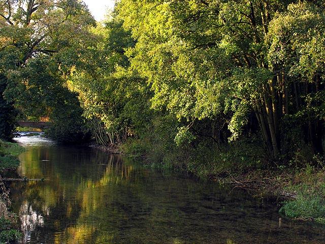 Lambourn River at Welford