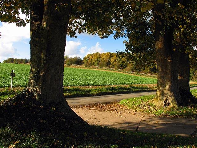 Farmland near Boxford