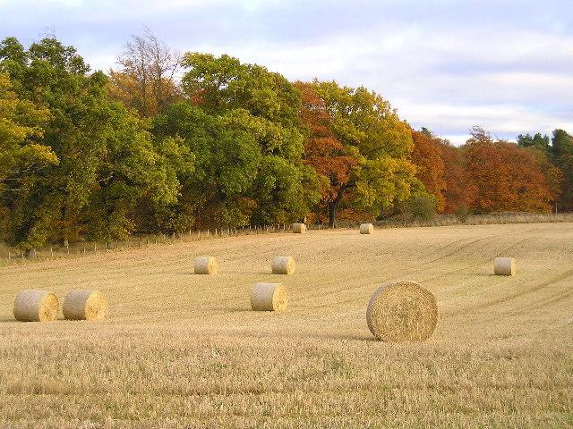 Autumn Colours at Ballathie