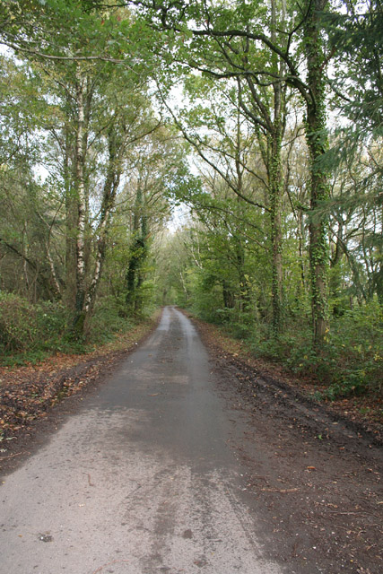 Broadhembury: lane at Kentis Moor