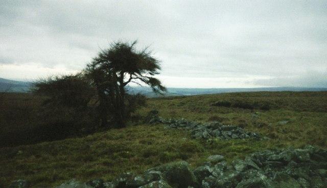 Harthole Plantation