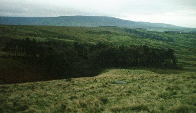 Swine Clough Plantation