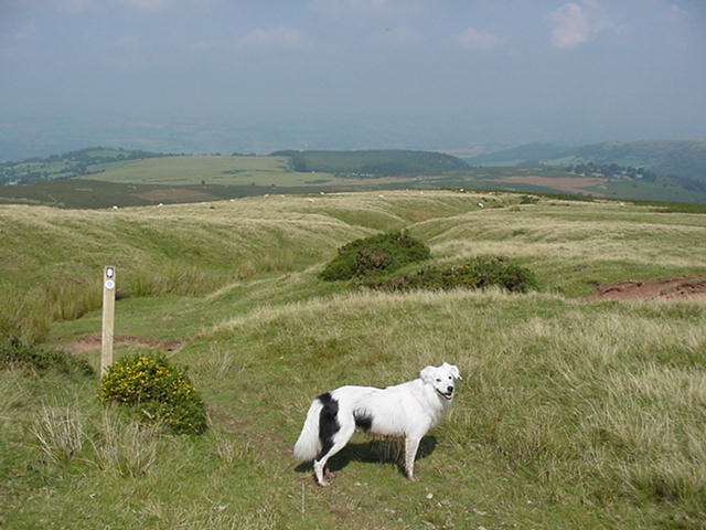 Below Hay Bluff - on Offas Dyke Path