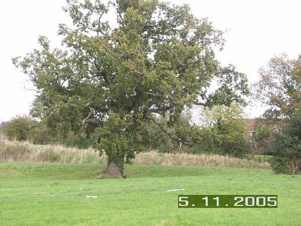 Holbury Manor Park