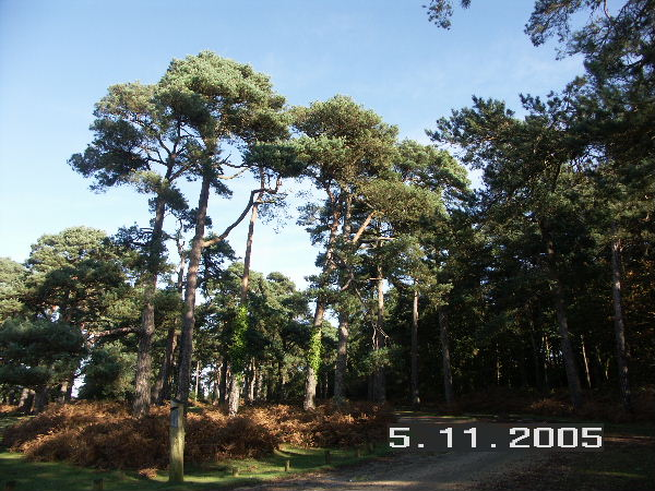 Norleywood Inclosure, New Forest National Park, Hants