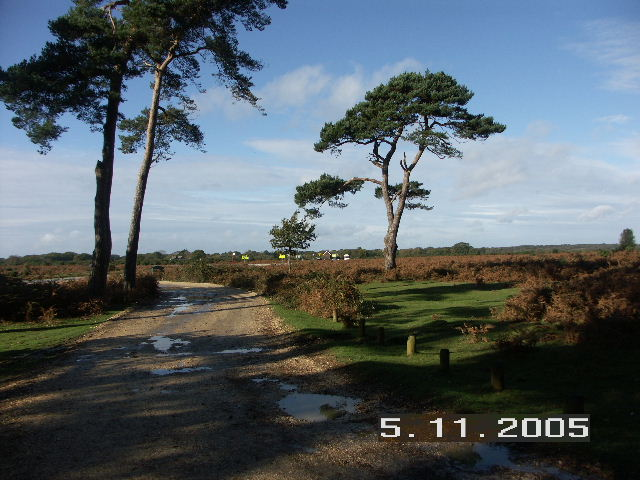 Junction of Norleywood Road and B3054, New Forest National Park, Hants