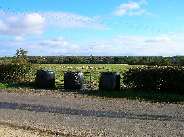 Grazing sheep, near Hurstpierpoint.