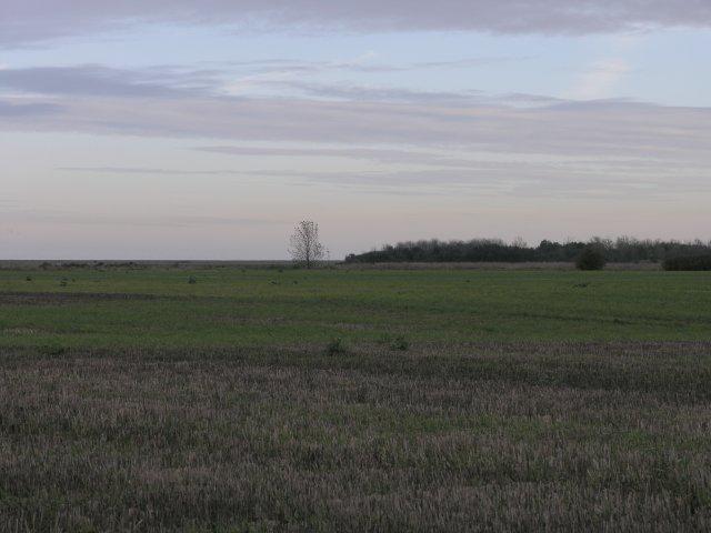 Reclaimed Salt Marsh Land
