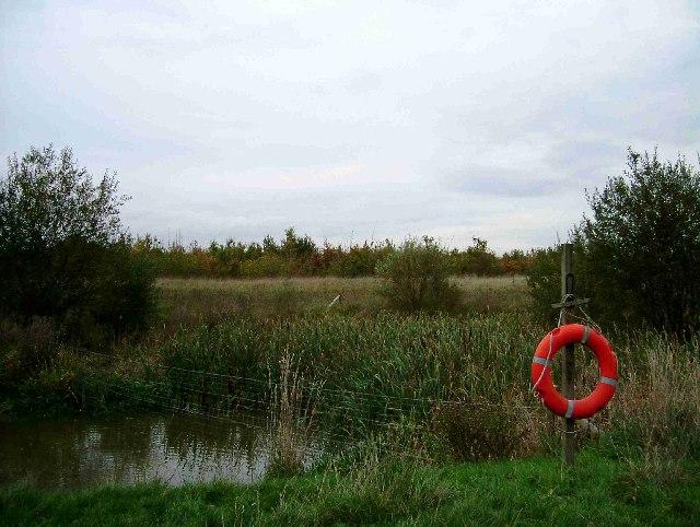 Pond in Ramsden Heath
