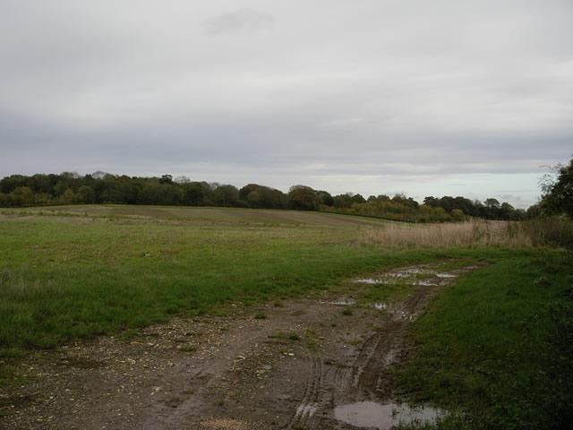 Fields between Littleton and Crawley