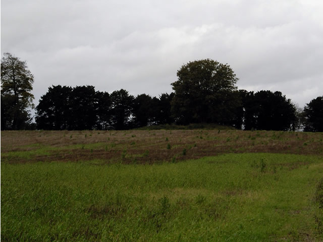 Tumulus, south of Crawley