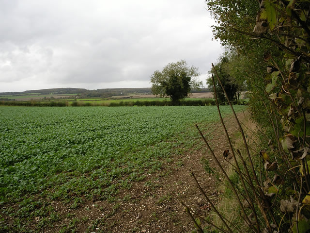 Fields east of Crawley