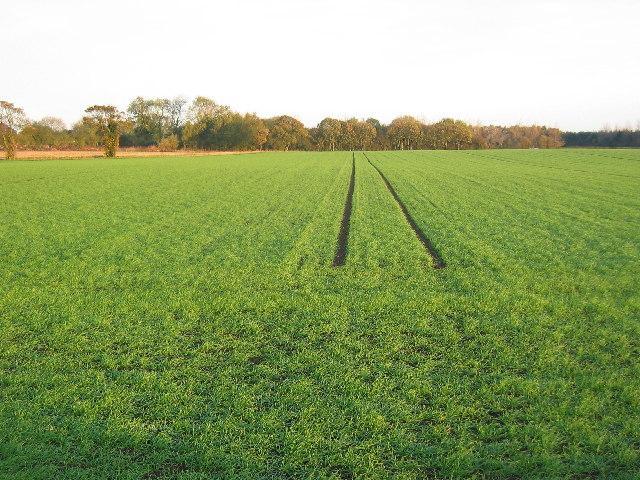 Farmland SE of Great Hatfield