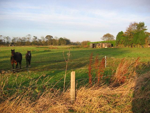 Pasture near Hornsea