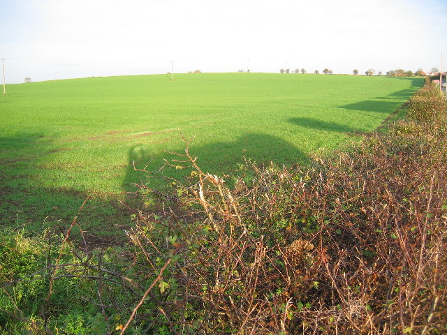 Farmland North of Hornsea